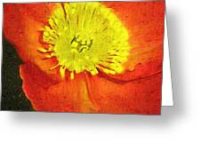 Orange Poppy Greeting Card