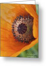 Orange Poppy With Texture Greeting Card