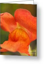 Orange Pout 2 Greeting Card