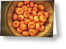 Orange Pumpkins Autumn Background. Greeting Card