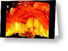 Orange Ranunculus Polar Coordinate Greeting Card