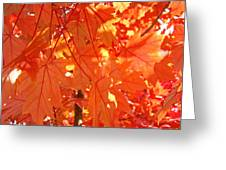 Orange Red Fall Leaves Autumn Tree Art Baslee Troutman Greeting Card