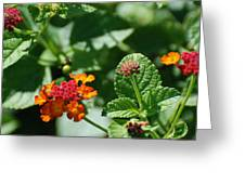 Orange  Red Flowers Greeting Card