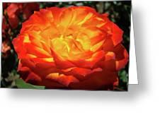Orange Red Rose Flower Art Prints Giclee Baslee Troutman Greeting Card