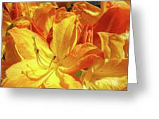 Orange Rhodies Flowers Art Rhododendron Baslee Troutman Greeting Card