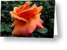 Orange Rose 1 Greeting Card