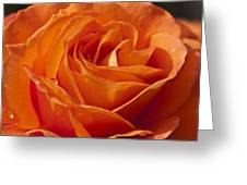 Orange Rose 2 Greeting Card