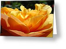 Orange Rose Art Prints Baslee Troutman Greeting Card