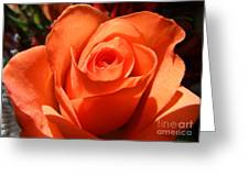 Orange Rose Photograph Greeting Card