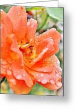 Orange Rose Raindrops Greeting Card