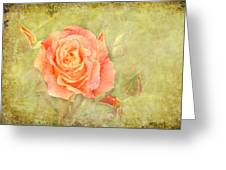 Orange Rose With Old Paint Texture Background Greeting Card