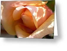Orange Rosebud Greeting Card