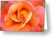 Orange Rosebud Highlight Greeting Card