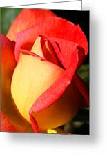 Orange Rosebud Greeting Card