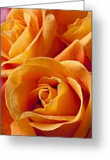 Orange Roses Greeting Card by Garry Gay