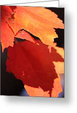 Orange Shadows Greeting Card