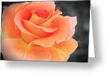 Orange Sherbert Greeting Card