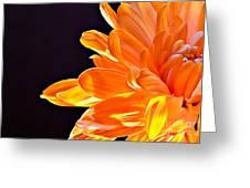 Orange Sherbet Greeting Card