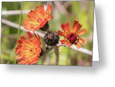 Orange Small Flowers With Buds Greeting Card