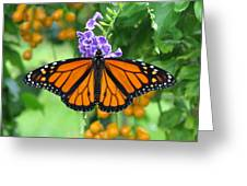 Orange Splendour Greeting Card