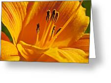 Orange Stamens Greeting Card