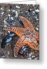 Orange Starfish Greeting Card
