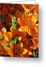 Orange Stars Greeting Card