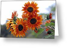 Orange Sunflower 1 Greeting Card