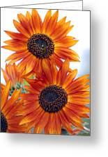 Orange Sunflower 2 Greeting Card