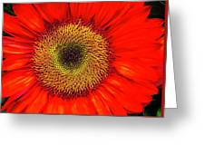 Orange Sunflower Greeting Card