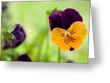 Orange Surprise Greeting Card
