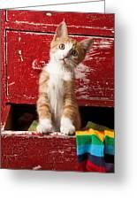 Orange Tabby Kitten In Red Drawer  Greeting Card