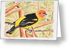 Orange Tanager Greeting Card