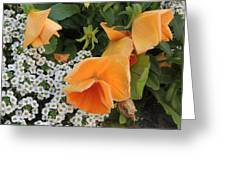 Orange Teardrop With White Lace Greeting Card