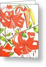 Orange Tiger Lilies Greeting Card