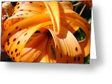 Orange Tiger Lily Flower Art Prints Giclee Baslee Troutman Greeting Card