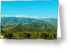 Orange Tree Grove, Santa Paula, Ventura Greeting Card