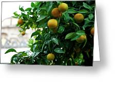 Orange Tree Greeting Card by Lorraine Devon Wilke