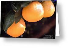 Orange Trio Greeting Card