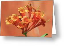 Orange Trumpet Honeysuckle Greeting Card