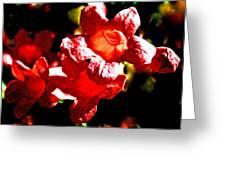 Cross Vine At Pilgrim Place In Claremont-california- Greeting Card