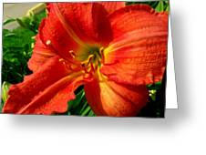 Orange Trumpeting Lily Greeting Card