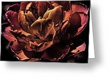 Orange Tulip Greeting Card
