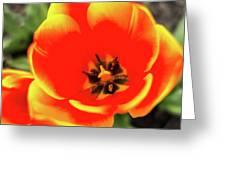 Orange Tulip Flowers In Spring Garden Greeting Card