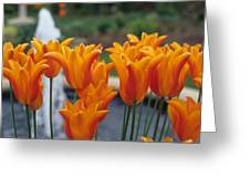 Orange Tulips In A Colonial Garden Greeting Card
