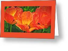 Orange Tulips With Brocade Greeting Card