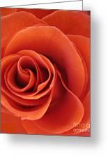Orange Twist Rose 5 Greeting Card