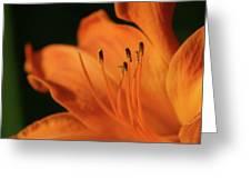 Orange Wave 3096 H_2 Greeting Card
