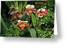 Orange White Orchid Greeting Card
