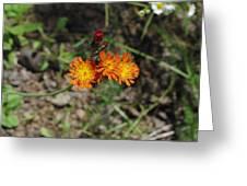 Orange Wild Flowers Greeting Card